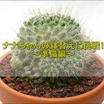 DSC 1029 1 150x150 - サボテン(七々子丸)の鉢替えにチャレンジ!~前編~