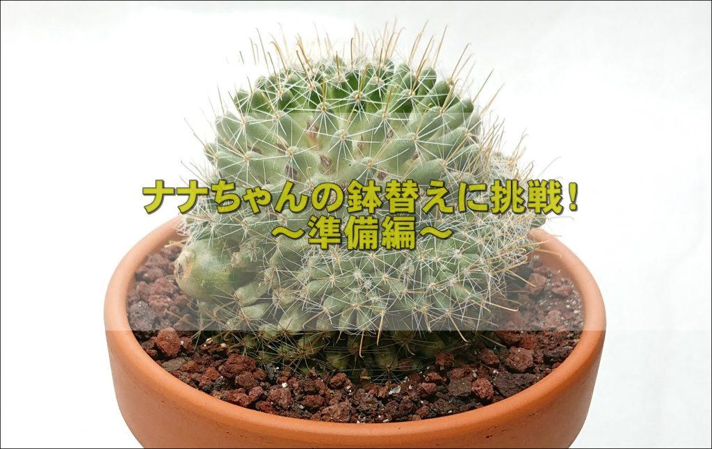 DSC 1029 1 - サボテン(七々子丸)の鉢替えにチャレンジ!~前編~